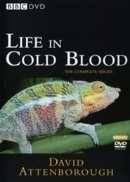 Best Documentary Movies of 2008 : Life in Cold Blood