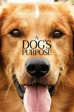 Best Comedy Movies of 2017 : A Dog's Purpose