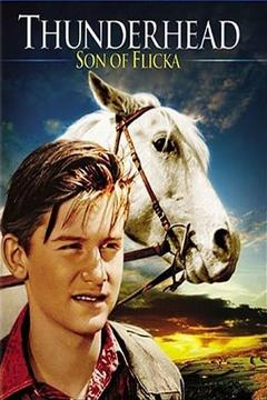 Best Family Movies of 1945 : Thunderhead - Son of Flicka