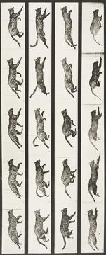 Best Movies of 1887 : Cat Trotting, Changing to a Gallop