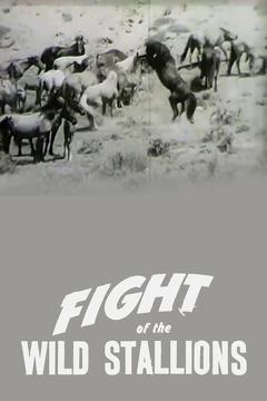 Best Documentary Movies of 1947 : Fight of the Wild Stallions