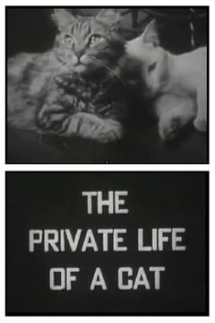 Best Documentary Movies of 1946 : The Private Life of a Cat