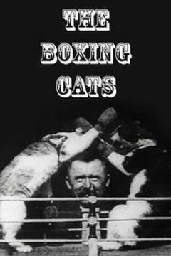 Best Action Movies of 1894 : The Boxing Cats (Prof. Welton's)