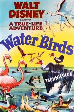 Best Documentary Movies of 1952 : Water Birds