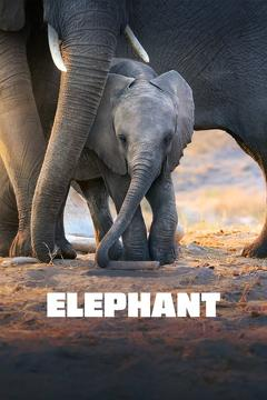 Best Documentary Movies of This Year: Elephant